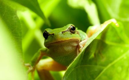 Umweltfreundlich und bio: Haushaltsreiniger von Frosch.