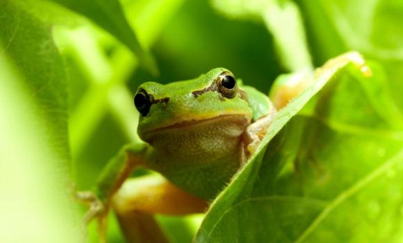 Frosch: Vorreiter in Sachen Bio-Haushaltsreiniger