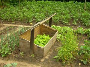 fr hbeet anlegen und selber machen nachhaltig salat und gem se anbauen. Black Bedroom Furniture Sets. Home Design Ideas