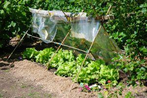 fr hbeet anlegen und selber machen nachhaltig salat und. Black Bedroom Furniture Sets. Home Design Ideas