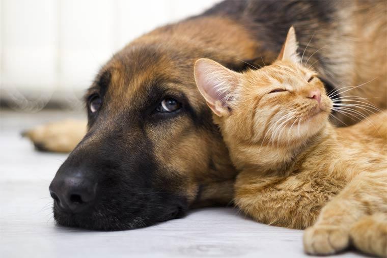 Ein sauberes zu Hause trotz Haustier