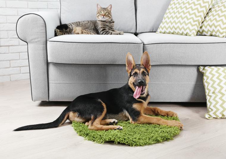 Sauberkeit und Frische im eigenen Heim mit Haustier