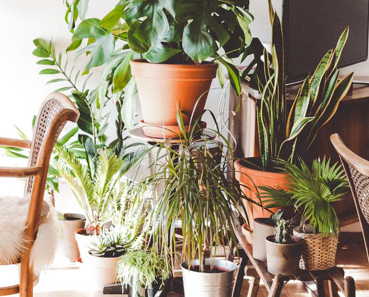 das solltest du beim bau eines indoor jungles beachten pflanzenpflege tipps f r anf nger. Black Bedroom Furniture Sets. Home Design Ideas