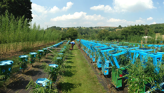 Nachhaltige Holzfarm
