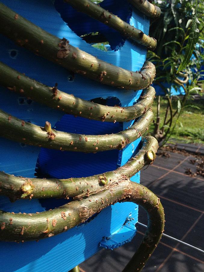 Holzmöbel nachhaltig produziert aus Bäumen die in ...