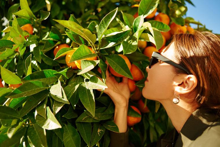 Sommerlich duftende Orangen