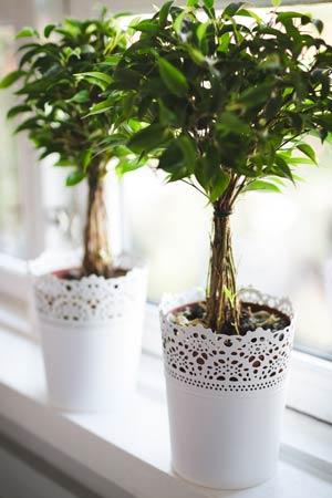 Pflanzen auf Fensterbank
