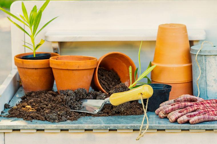 Indoor-Jungle selber bauen: Tipps für Anfänger
