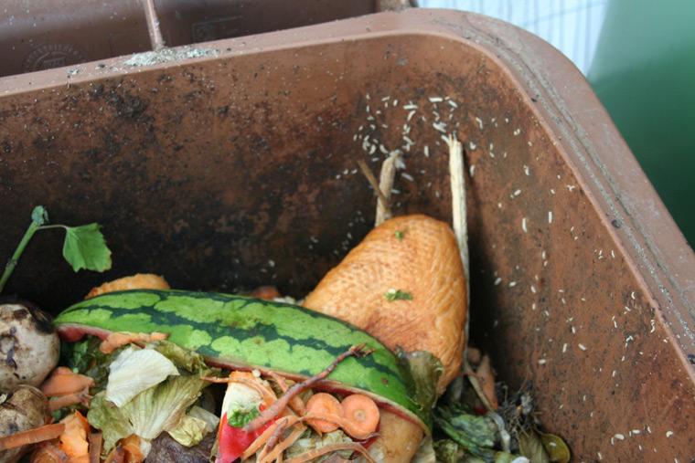 Wenn Maden oder Schimmel die Tonne bereits befallen haben, muss diese nach der Leerung natürlich schnellstens geputzt werden