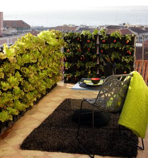 Mini Garten Blumen Kräuter Oder Gemüse Vertikal Anbauen