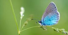 Welt der Schmetterlinge