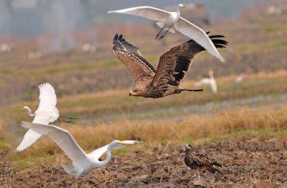 toom Baumarkt setzt sich für mehr Vogelschutz und Biodiversität ein