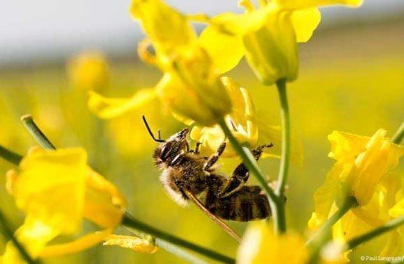 Bienensterben: Tipps zum Bienenschutz