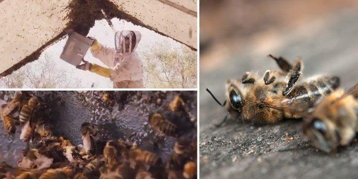 Bienensterben durch Massenhaltung: So qualvoll sterben Bienen für Billighonig