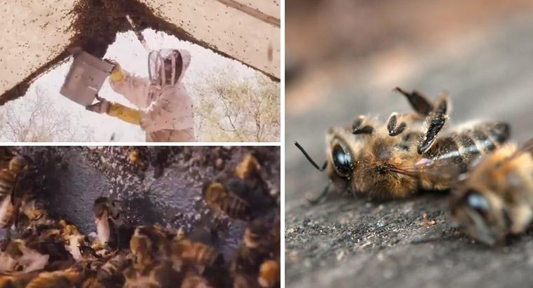 Bienensterben durch Massenhaltung