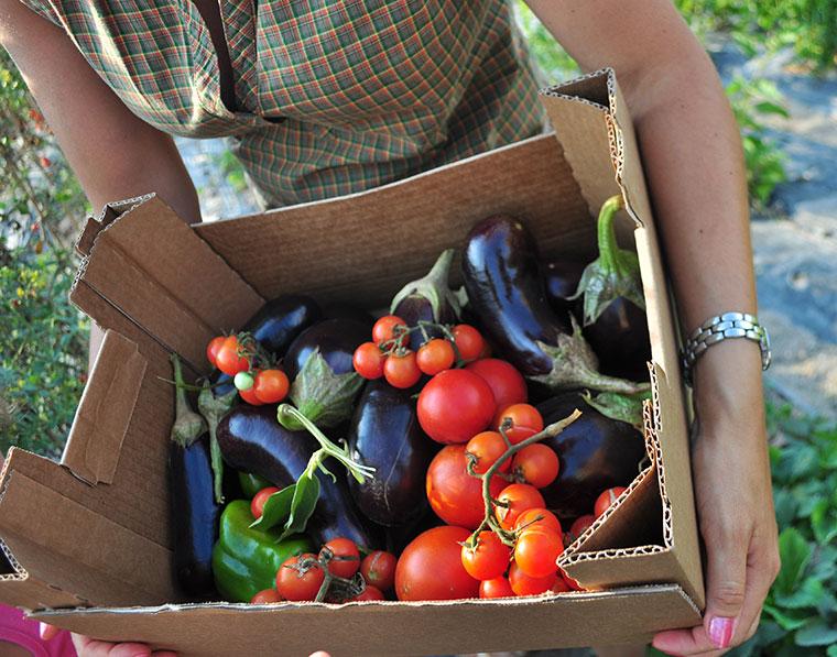 Bio Lebensmittel enthalten definitiv weniger Schadstoffe.