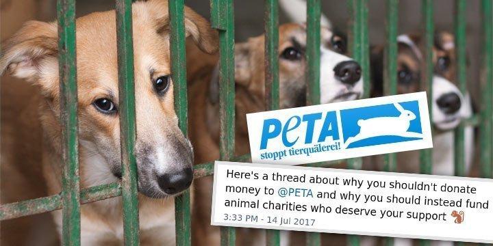 Britischer YouTuber Calum McSwiggan prangert PETA an