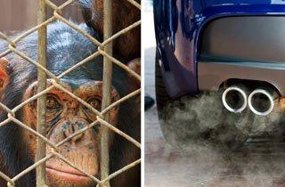 VW führte Diesel-Abgas-Tests an Affen und Menschen durch
