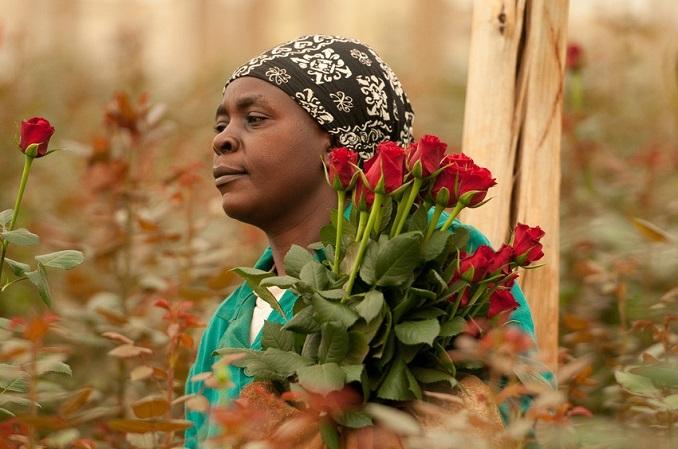 Eine Arbeiterin auf einer fairen Blumenfarm © Hartmut Fiebig/ Fairtrade-Deutschland