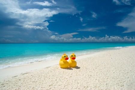 Friendly Floatees: Meeresforschung mit Quietscheentchen.