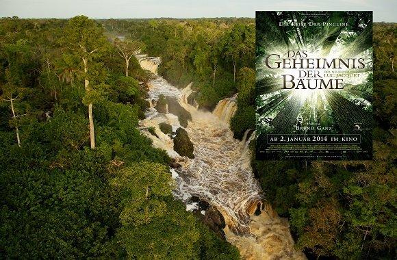 Jetzt gewinnen: Kino-Freikarten für das Geheimnis der Bäume
