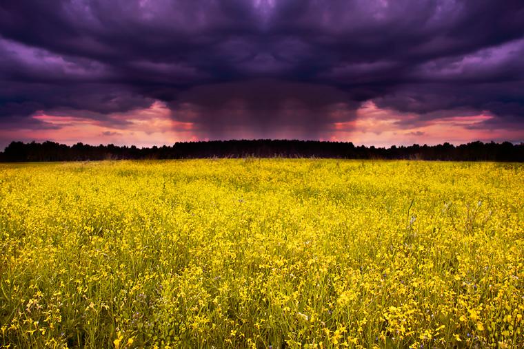 Gewitterwolken über gelbem Feld