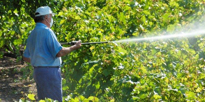 Systematische Täuschung mit Pestiziden?