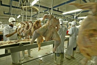 Massentierhaltung Hühner Fleisch
