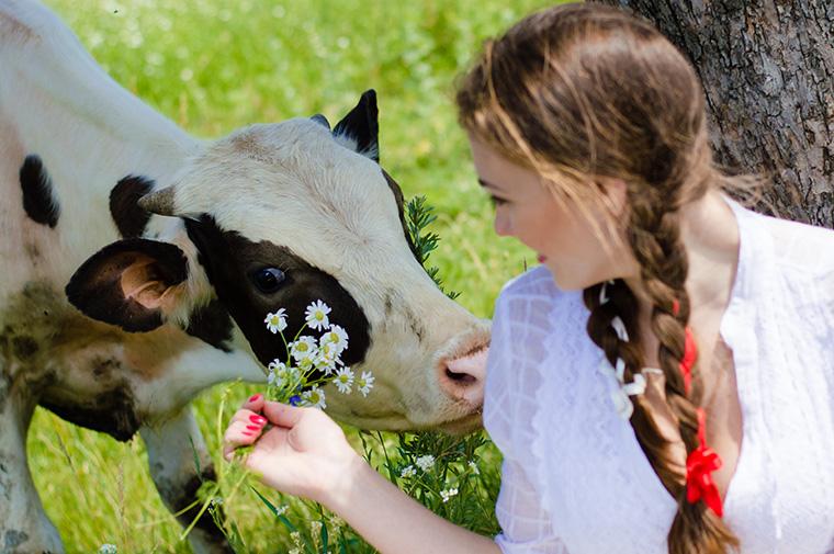 Müssen Tiere leiden, damit noch mehr Fleisch und Milch konsumiert werden kann?