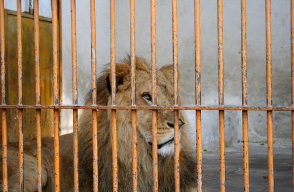 Giraffe an Löwen verfüttert - Pfeifen Zoos auf Tierschutz & artgerechte Tierhaltung?