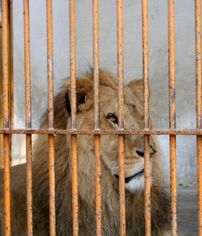 Sind Zoos Tiergefängnisse?