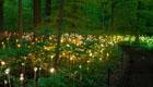 Magisches LED-Blumenmeer von Bruce Munro