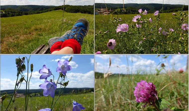 Vegetarismus Sport Wandern und Fotografie der Ecolifestyle des Mohrblogs
