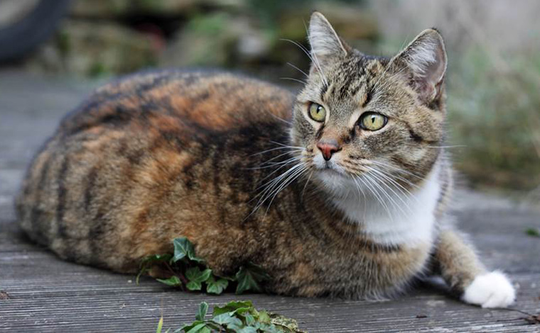 Katzenliebhaber aufgepasst