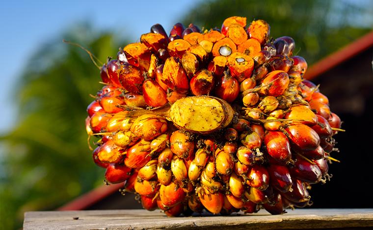 palmfett ungesund