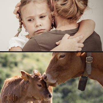 Dieser emotionale PETA-Spot vergleicht Milchkühe mit Müttern