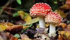Der Pilz als Naturschauspiel