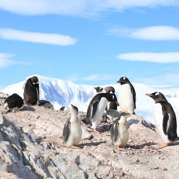 Pinguin Doku: Eine Reise in die Antarktis