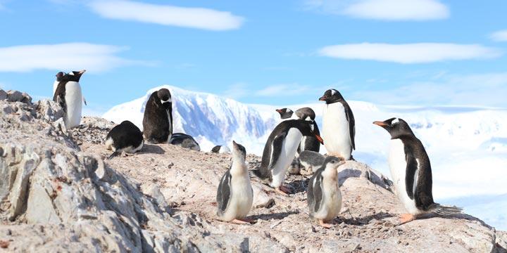 BBC-Doku reist zu den Pinguinen der Antarktis