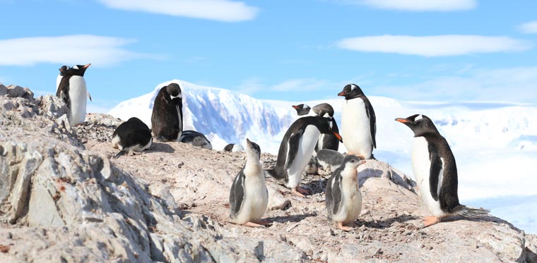 Pinguine hautnah in der Doku, Our World: The Penguin Watchers