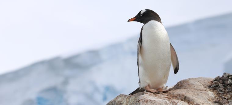 ecowoman TV-Tipp: ?Our World: The Penguin Watchers? - am Samstag, 9. April, um 13.30 Uhr und 18.30 Uhr und am Sonntag, 10. April, um 6.30 Uhr und 19.30 Uhr auf BBC World News.