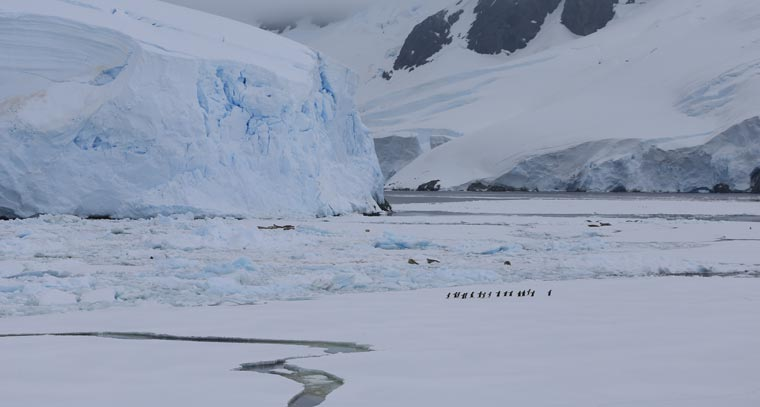 Ziel des Projekts ist es, herauszufinden, wie Klimaveränderungen, Fischfang, Umweltverschmutzung und Krankheiten die Pinguine in der antarktischen Region  bedrohen.