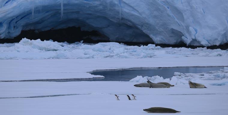 Ein Netzwerk aus Kameras,nimmt die Pinguine hautnah auf
