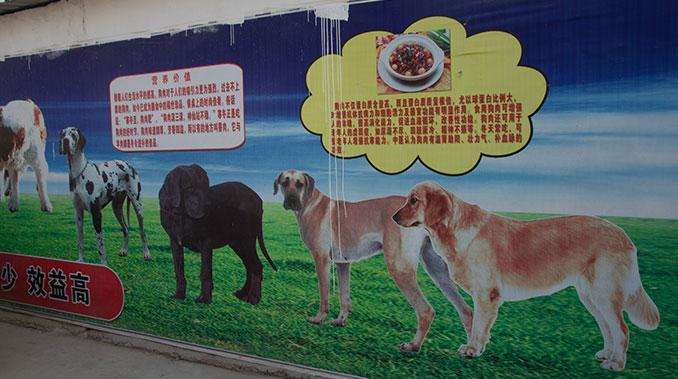 Wandplakat mit Hunden in China