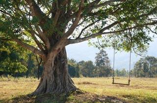 Fotowettbewerb: Baum, ich mag dich