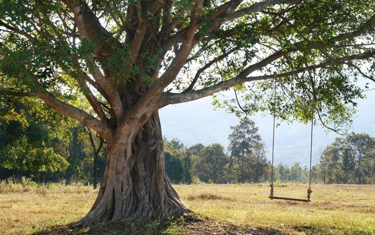 Bäume begleiten uns durchs ganze Leben