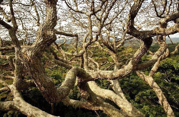 Dokumentarfilm Das Geheimnis der Bäume von Luc Jaquet und Francis Hallé