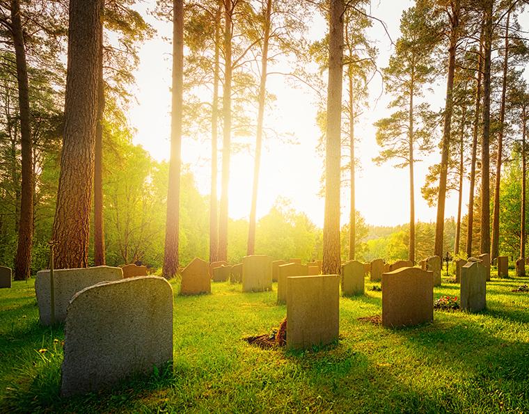 Öko-Bestattung auf dem Waldfriedhof