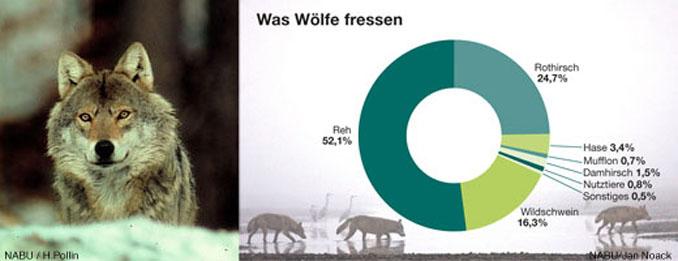 Wolf_essen