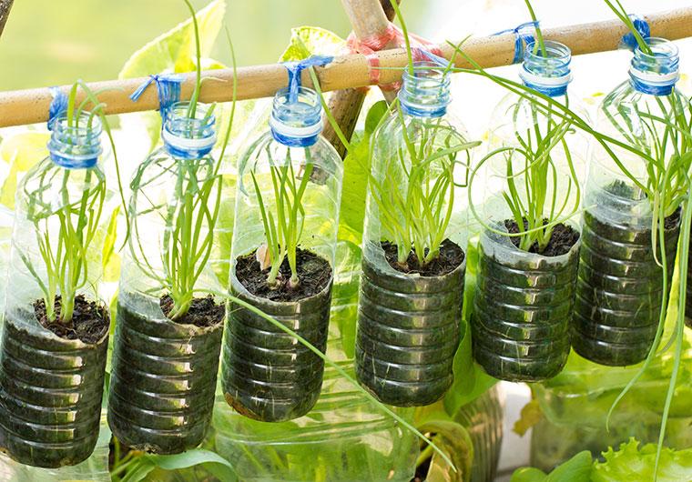 In vielen Städten dienen Plastikflaschen als Pflanzenzuchtstation.
